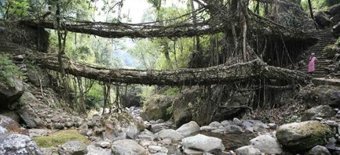 roots-crop