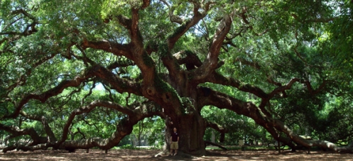 angel-oak
