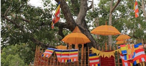buddha-tree