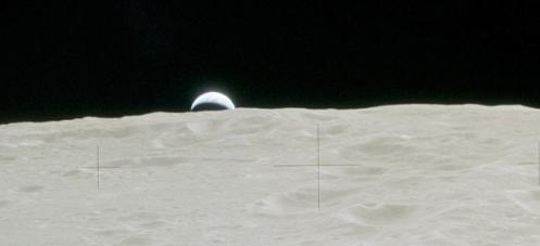 moon-treestop