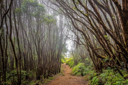 Kauai Pihea Trail