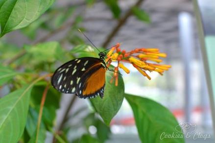 SF Butterfly