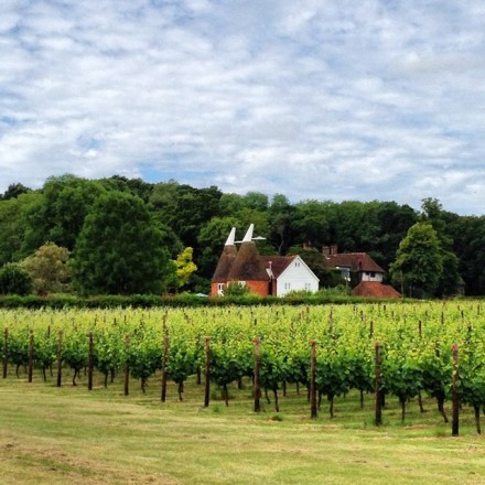 Experience something difference, such as award-winning vineyard and cider house tour, in the village of Staplehurst .