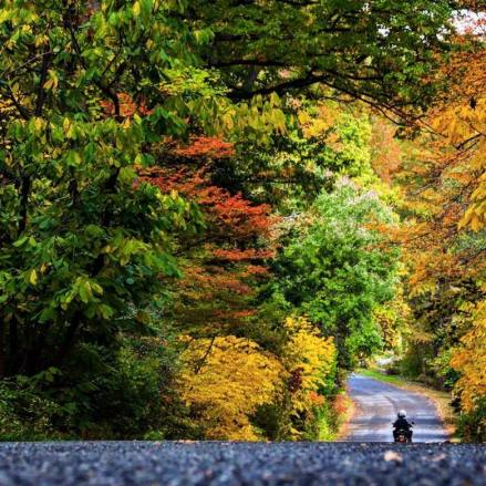 Follow fall, wherever it takes you