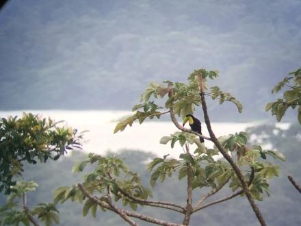 CR Toucan